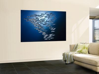 Sardine Shoal by Mark Webster