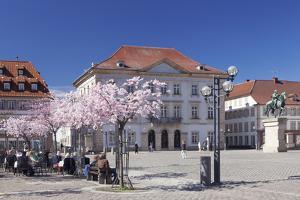 Almond Blossom by Markus