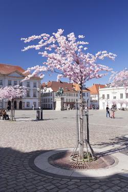 Almond Blossom in the Market Place, Landau, Deutsche Weinstrasse (German Wine Road) by Markus Lange