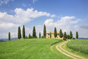 Farm House with Cypress Tree by Markus Lange