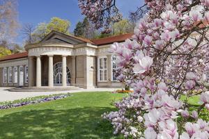 Health Resort House, Bad Cannstatt, Magnolia Blossom, Stuttgart, Baden-Wurttemberg Germany by Markus Lange