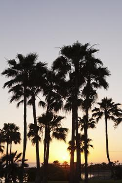 Palm Trees at Sunset, Playa De Los Amadores, Gran Canaria, Canary Islands, Spain, Atlantic, Europe by Markus Lange