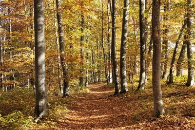 Path in a Forest in Autumn, Swabian Alb, Baden Wurttemberg, Germany, Europe
