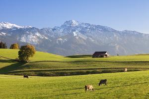 Prealps Landscape with a Cottage and Cows by Markus Lange