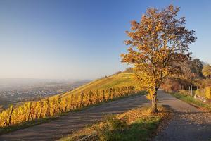 View over Stuttgart with the Tomb Chapel, Vineyards at Sundown in Autumn, Germany by Markus Lange