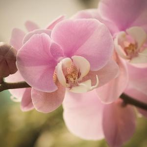 Orchid Affair by Marlana Semenza
