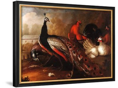 Peacock and Pheasant