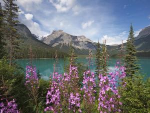 Emerald Lake, Yoho National Park, UNESCO World Heritage Site, British Columbia, Rocky Mountains, Ca by Martin Child