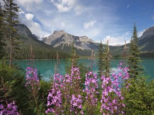 Emerald Lake, Yoho National Park, UNESCO World Heritage Site, British Columbia, Rocky Mountains, Ca by Martin Child