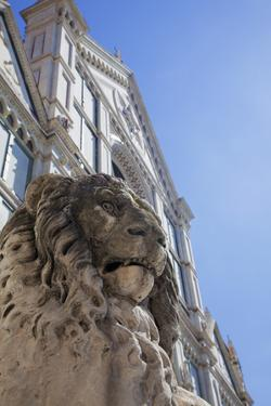 Lion Statue in Front of Santa Croce Church by Martin Child