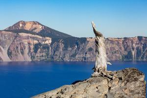 Lone tree trunk over Crater Lake, the deepest lake in the U.S.A., part of the Cascade Range, Oregon by Martin Child