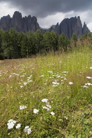 Meadow and the Rosengarten Peaks in the Dolomites Near Canazei, Trentino-Alto Adige, Italy, Europe by Martin Child