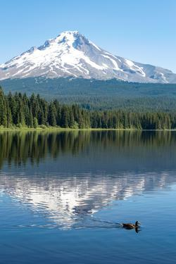 Mount Hood, part of the Cascade Range, perfectly reflected in the still waters of Trillium Lake, Or by Martin Child
