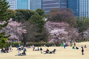 People Relaxing and Picnicking Amongst Beautiful Cherry Blossom, Tokyo Imperial Palace East Gardens by Martin Child