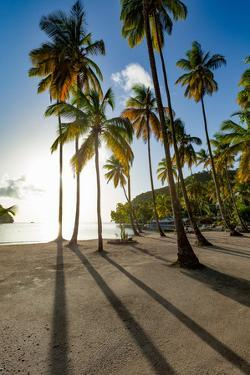 Tall palms and long shadows on the small beach at Marigot Bay, St. Lucia, Windward Islands, West In by Martin Child