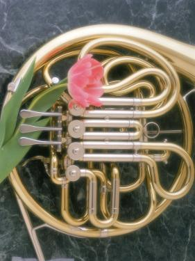 French Horn with a Tulip by Martin Fox