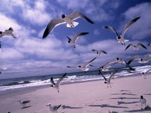 Gulls Flying Over Beach, Ocracoke Island, NC by Martin Fox