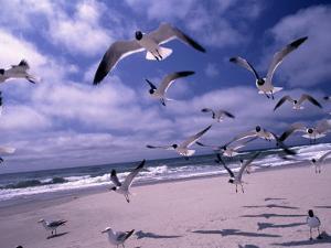 Gulls Flying Over Beach, Ocracoke Island, NC by Martin Fox