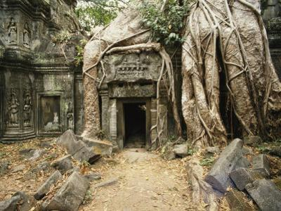 Giant Strangler Fig Tree Roots Embrace the Crumbling Ta Prohm Temple