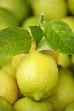 Fresh Lemons by Martin Harvey