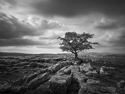 Pavement and Tree I by Martin Henson