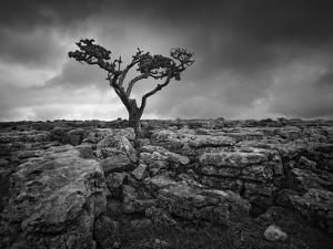 Pavement and Tree II by Martin Henson