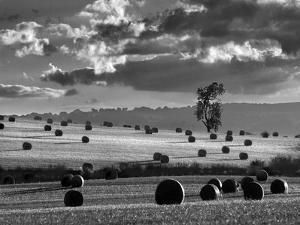 Rolls of Hay by Martin Henson
