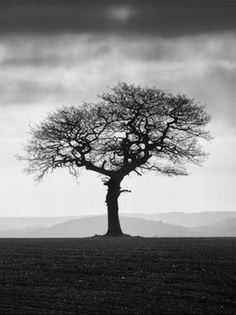 Without Leaves by Martin Henson