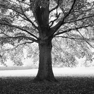 Woodland Tones III by Martin Henson