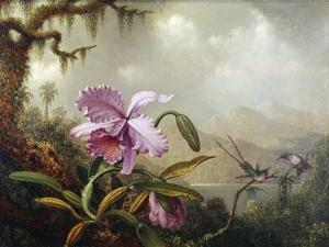 Hummingbirds and Orchids by Martin Johnson Heade