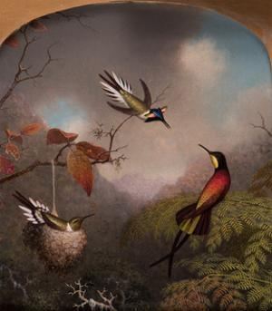 Hummingbirds: Two 'Sungems' and a 'Crimson Topaz', 1866 by Martin Johnson Heade