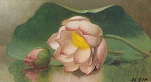 Lotus Blossom by Martin Johnson Heade