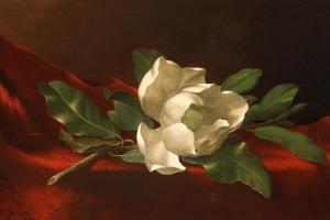 Magnolia, C.1885-95 by Martin Johnson Heade