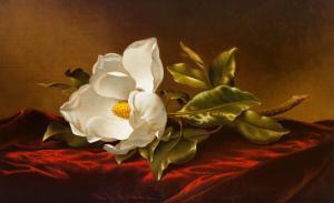 Magnolia Grandiflora by Martin Johnson Heade