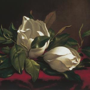 Magnolia Still Life I (detail) by Martin Johnson Heade