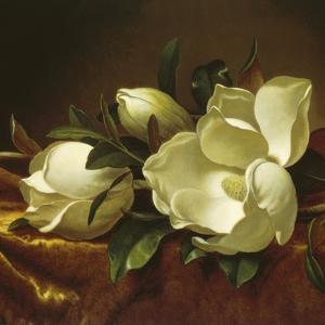 Magnolia Still Life II (detail) by Martin Johnson Heade