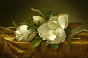 Magnolias on Gold Velvet Cloth, C. 1889 by Martin Johnson Heade