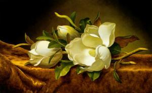 Magnolias on Gold Velvet Cloth by Martin Johnson Heade