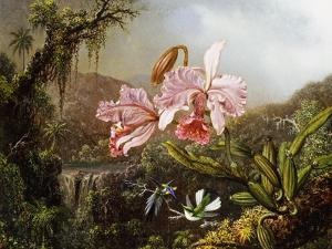 Orchids and Hummingbirds in a Brazilian Jungle by Martin Johnson Heade