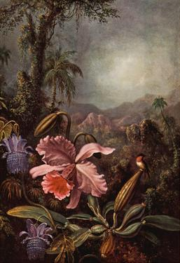 Martin Johnson Heade Orchids Passion Flowers and Hummingbirds Art Print Poster