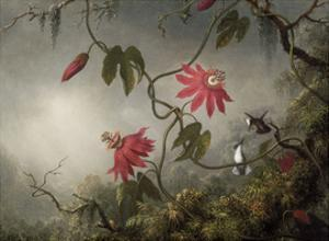 Passion Flowers and Hummingbirds, about 1870-83 by Martin Johnson Heade