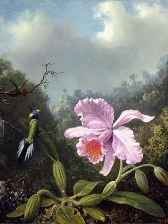Still Life with Orchid and Pair of Hummingbirds, C.1890S