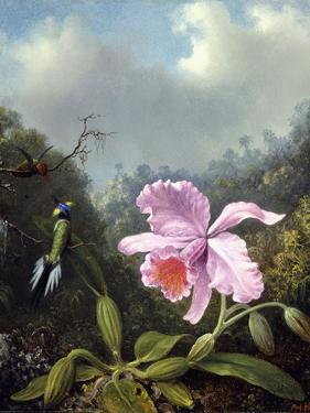 Still Life with Orchid and Pair of Hummingbirds, C.1890S by Martin Johnson Heade