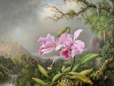 Study of an Orchid, 1872