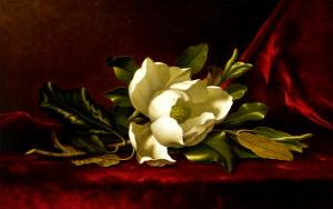 The Magnolia Flower by Martin Johnson Heade
