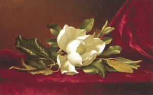 The Magnolia Flower by Martin Johnson Heade