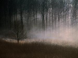 Forest Mist in Rural North West Sjaelland, Sjaelland Island, West Zealand, Denmark by Martin Lladó