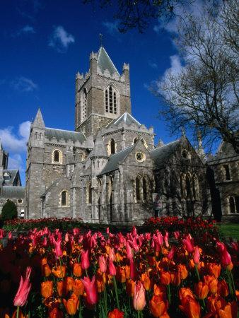Christ Church Cathedral Surrounded by Tulips in Bloom, Dublin, County Dublin, Ireland, Leinster