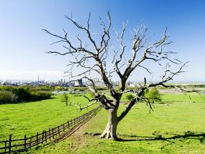 Dead Tree with Wilton International Industrial Complex in Background, Teeside, England by Martin Page