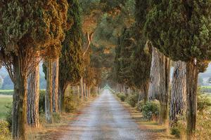 Avenue (Track) Lined with Pine Trees, Sunrise. by Martin Ruegner